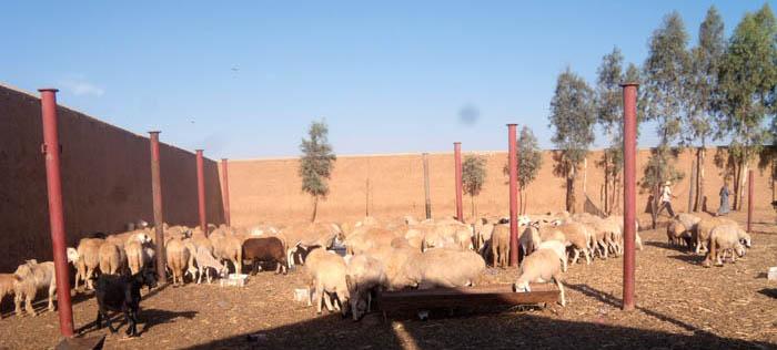 Mzouda, Morocco, July 2010