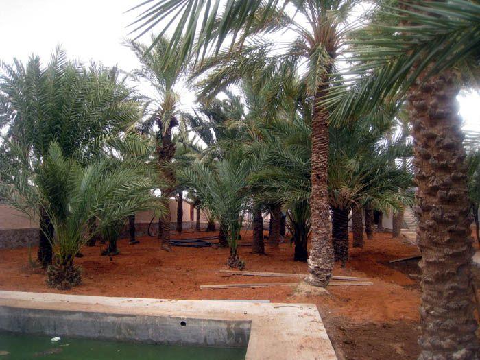 Figuig | Morocco<br/>