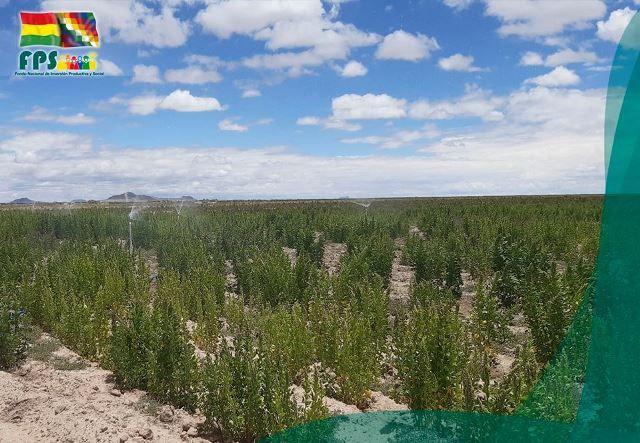 Quillacas, Bolivia, December 2019