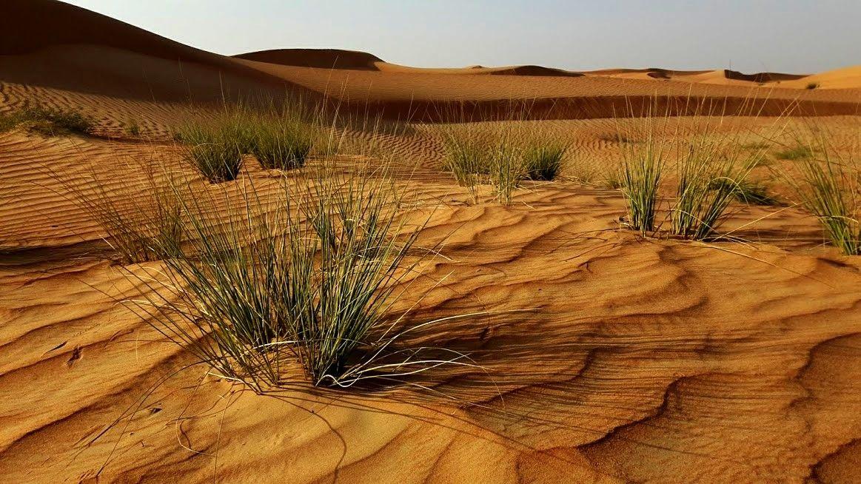 Margham | United Arab Emirates<br/>